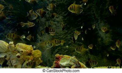 fish underwater in ocean. Fish swim in video a sea of...