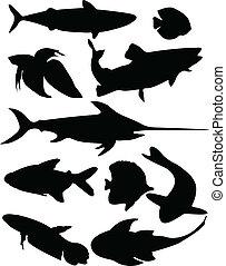 fish, vecteur, -, collection