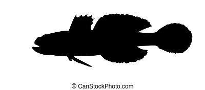 fish, vecteur, silhouette, fond blanc