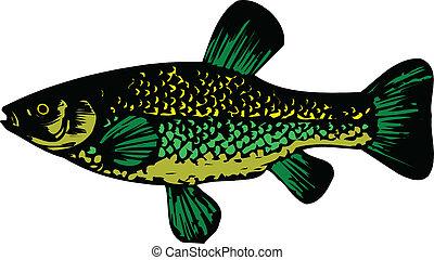 Fish. Vector.