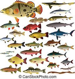 fish, vektor, samling