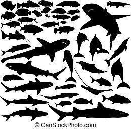 fish, vettore, set