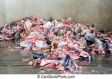 Fish garbage in the large Kitchen Waste rubbish, for recycling
