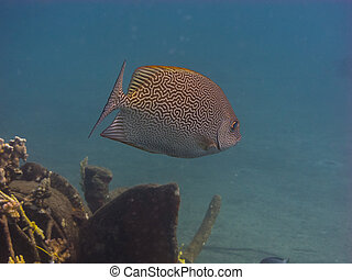 fish with pattern in the sea