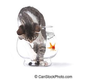 fishbowl, mauvais, conduire mal, chat