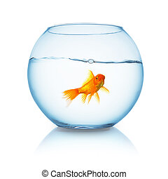 fishbowl with a goldfish