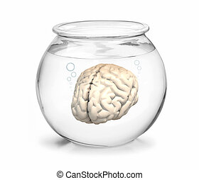 fishbowl with brain inside - fishbowl with human brain...
