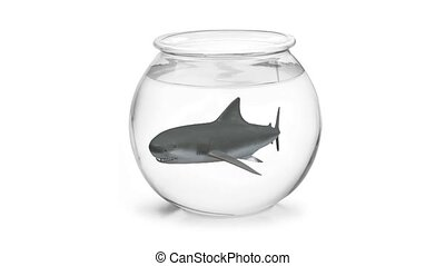 fishbowl with shark inside 3d animation