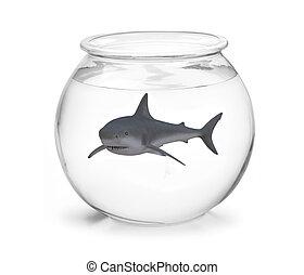 fishbowl with shark inside, 3d illustration