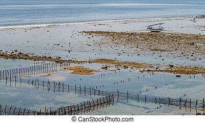 Fisher Boat at low tide near seaweed plantations algal -...