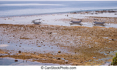 Fisher Boats at low tide near seaweed plantations algal -...