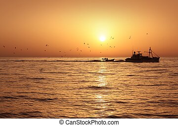 fisherboat, profissional, sardinha, apanhar, pescaria, amanhecer