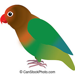 Fisheri lovebird - An illustration of a fisheri lovebird
