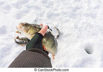 fisherman catch on winter fishing
