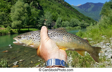 fisherman catching brown trout in river