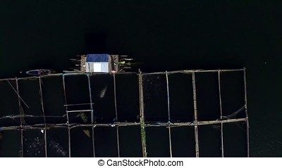 fisherman feeding fish in bamboo cages on mountain lake....
