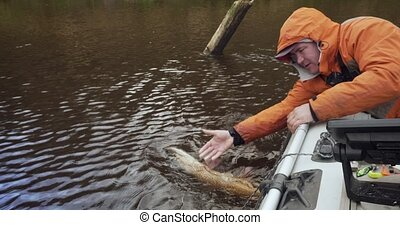Fisherman lets go just caught pike fish. - Fisherman on the ...