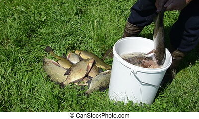 fisherman pull fish