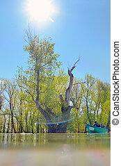 boat in summer on danube river