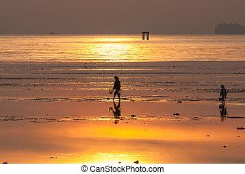 fishery find razor clam on the beach