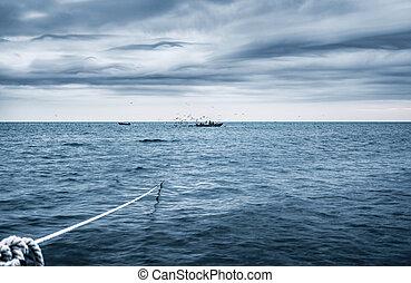 fishery - fishermen check the entangling net