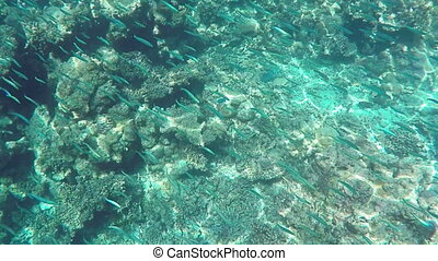 Fishes and Colorful Corals at the Beautiful Tropical Island of Maldives in Indian Ocean. Underwater Shot