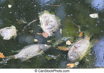 fishes died because sewage. - fishes died because sewage ...
