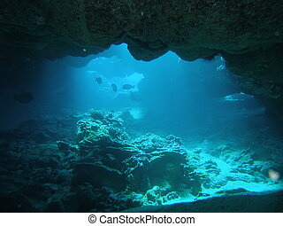 Fishes in caves
