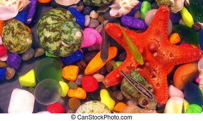 Fishes in Colorful Aquarium in Underwater