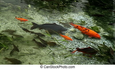 Fishes in the clear water