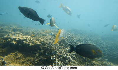 Fishes near coral reefs - An establishing shot underwater...
