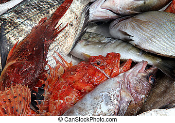 fishes on a fish market stall