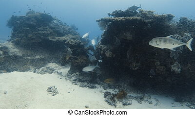 Fishes playing on a coral reef