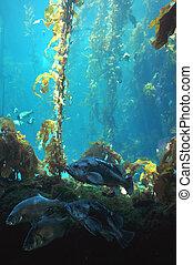 Somes fishes in the main tank, Monterrey aquarium, California