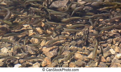 Fishes - Photo of a lot of fishes underwater