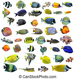 fishes - group of fishes on a white background