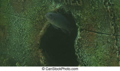 Fishes swimming in aquarium