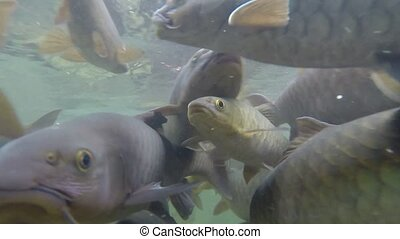 Fishes swimming in the river