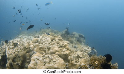 Fishes with coral reef underwater
