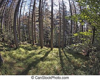 fisheye forest landscape