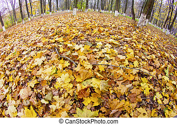 Fisheye snapshot of autumn maple leaves in park
