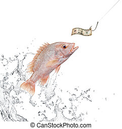 fishing bait - fish jumping out from water hunting for money