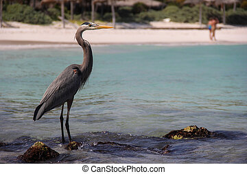 Fishing Bird in Xpu-Ha