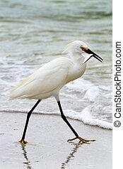Fishing Bird - White bird is walking along the water with ...