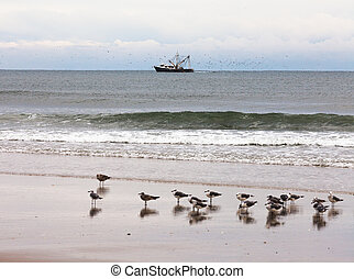 Fishing boat and gulls beach scene OBX NC US - Fish trawler...