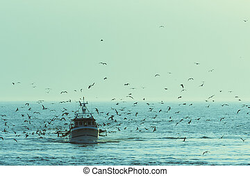 Fishing boat returning with lots of seagulls feeding at the ...