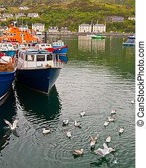 Fishing boats and seagulls, Isle of Skye. - Boats line the...