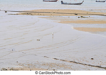 fishing boats near the sea and port in Phuket