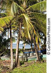 fishing boats under palm tree Caribbean Sea on Big Corn Island Nicaragua Central America