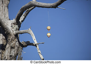 Fishing Bobbers in a Tree - Two fishing bobbers caught in a ...